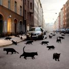 Cat S World Animal Volvo Cool 32x24 Print Poster