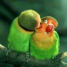 Bird Kiss Parrot Nature Love 32x24 Print Poster