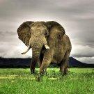 Majestic Elephant Animal National Geographic 32x24 Print Poster