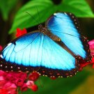 Beautiful Butterfly Macro Nature 32x24 Print Poster