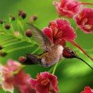 Hummingbird Macro Flowers Bird Nature 16x12 Print Poster