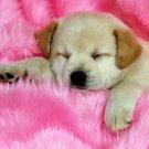 Cute Sleeping Puppy Small Dog Animal 16x12 Print Poster