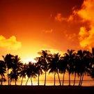 Sunset Palm Trees Beautiful Nature 16x12 Print Poster