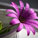 Purple Flower Beautiful Macro 16x12 Print Poster