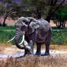 African Elephant Animal National Geographic 16x12 Print Poster