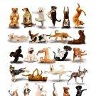 Yoga Dogs Funny Cool Animal 16x12 Print Poster