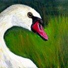 OSWOA White Swan