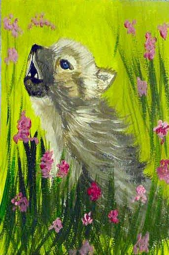 Baby Wolf