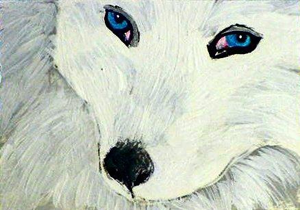 ACEO White Arctic Fox