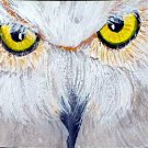 ACEO Owl Eyes