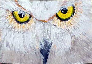 ACEO Owl Eyes