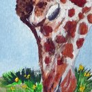 ACEO Giraffe Snack