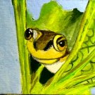 ACEO Peeking Frog