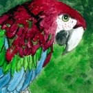 ACEO Greenwing Macaw