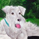 ACEO White Schnauzer Dog
