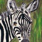 ACEO Zebra Face
