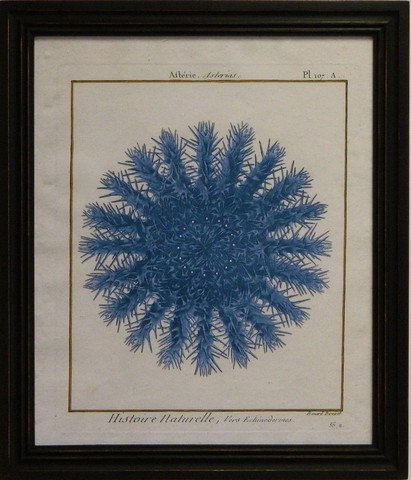 Sea Urchin I - Blue