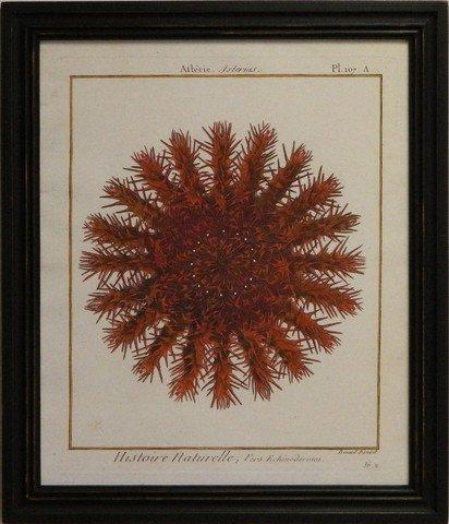 Sea Urchin I - Red