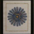 Sea Urchin II - Blue