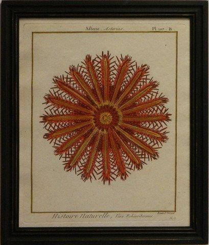 Sea Urchin II - Red