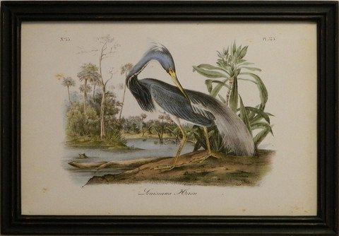 Audubon Louisiana Heron