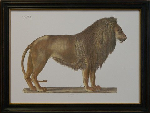 August Goldfuss Lion