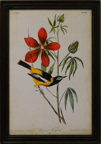 Audubon Common Tropial