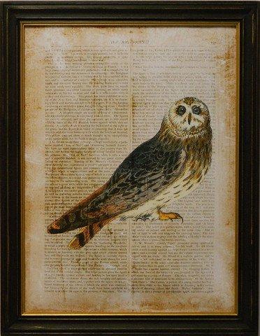 Antiquarian Bird I