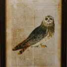 Antiquarian Bird I