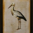 Antiquarian Bird II