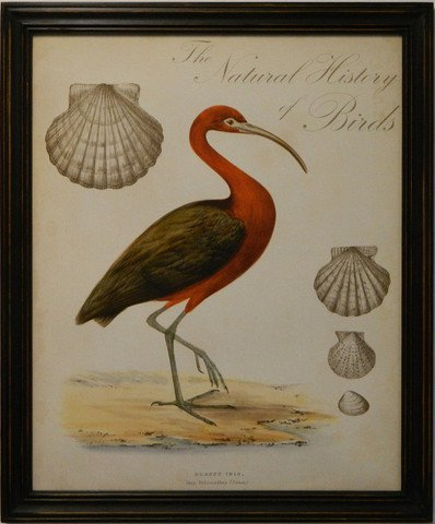 Natural History of Birds I