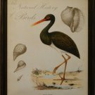 Natural History of Birds II