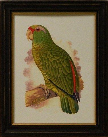 Antique Parrots II