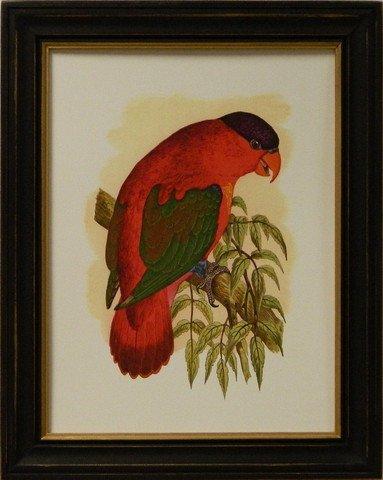 Antique Parrots III
