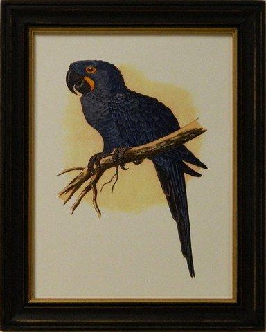 Antique Parrots IV