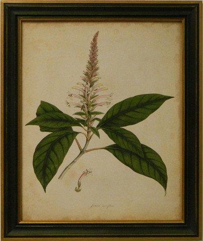 Engelmann Botanical II