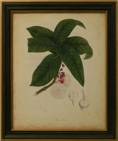 Engelmann Botanical V