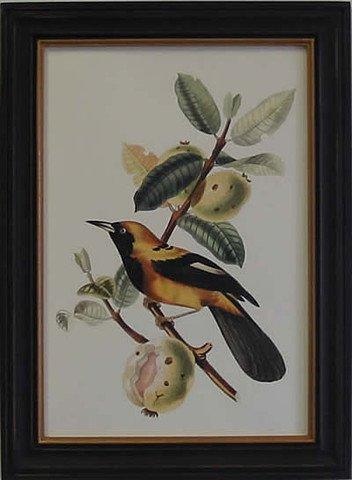 Exotic Bird II