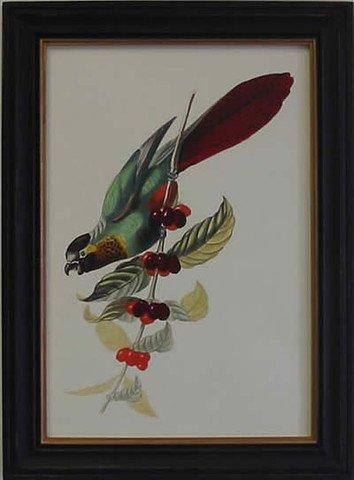 Exotic Bird IV
