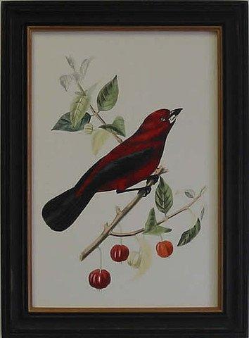 Exotic Bird V