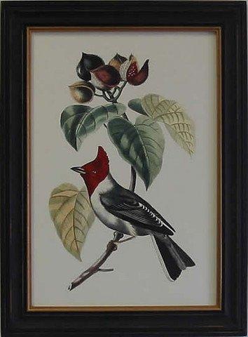 Exotic Bird VI