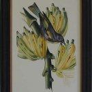 Exotic Bird VII