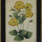 Curtis Blooms Yellow I - Black Frame