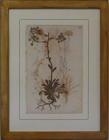 Pressed Botanical 17