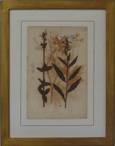 Pressed Botanical 37