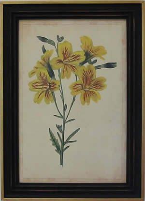 Curtis Blooms Yellow IV - Black Frame