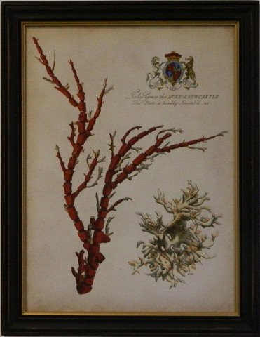 Imperial Coral I