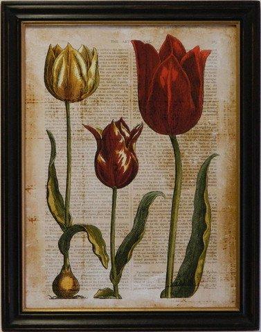 Antiquarian Tulip II