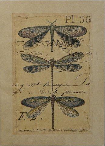 Dragonfly Ephemera II