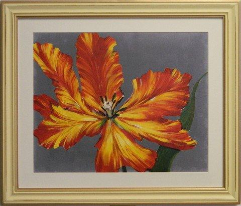 Tulip Portrait II